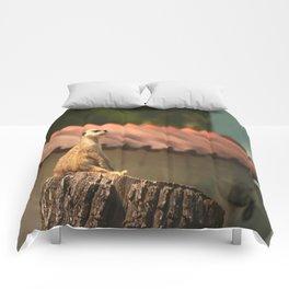 Meerkat Funny Observer #decor #society6 Comforters
