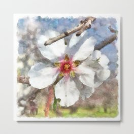 Almond Blossom Study Watercolor Metal Print