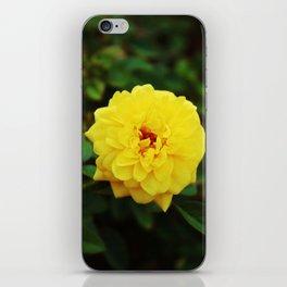 Autumn Yellow Rose iPhone Skin