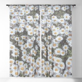 Passing By White Daisies Sheer Curtain