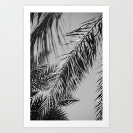 Fronds against the sky black and white Art Print