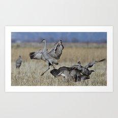 Dancing Sandhill Cranes, Grus canadensis Art Print