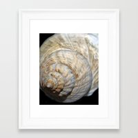 shell Framed Art Prints featuring Shell by Brian Raggatt