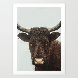 Cow Photography Art Print