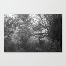 curious Canvas Print