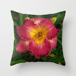 Sis Boom Bah daylily! A world of rose and gold Throw Pillow