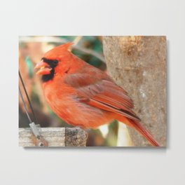 Enjoying lunch Metal Print