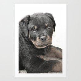 Rottweiler puppy Art Print