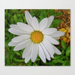 Daisy Face Canvas Print
