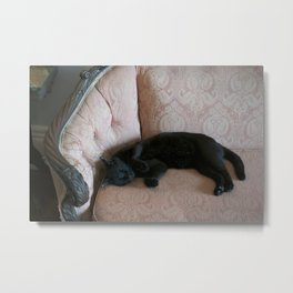 Hemingway's Cat on a Couch Metal Print