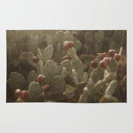 Cacti on Beach in Israel Rug