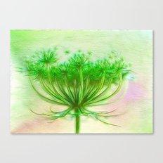 Queen Anne lace Canvas Print