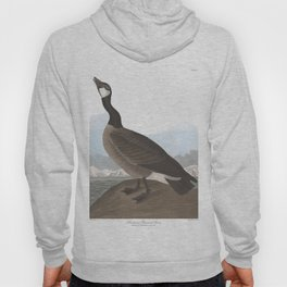 Hutchinss barnacle, Birds of America, Audubon Plate 277 Hoody