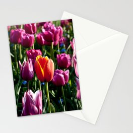 The Perfection - Ansu Stationery Cards
