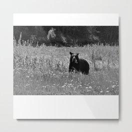 Black Bear Black and White Metal Print