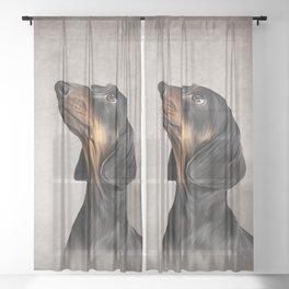 Drawing Dog breed dachshund 5 Sheer Curtain