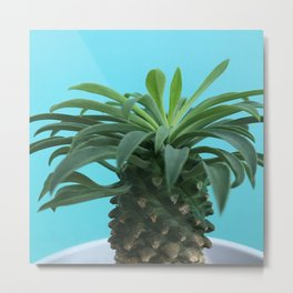 Euphorbia hypogaea(blue) Metal Print