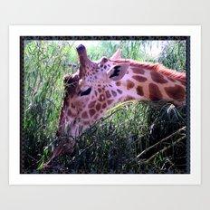 Oasis Giraffe Art Print