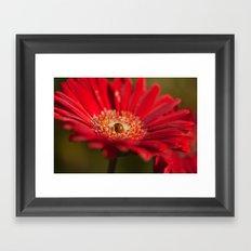 The Gerbera and the Ladybird Framed Art Print