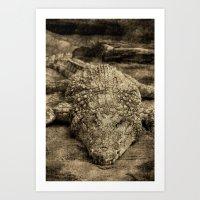 crocodile Art Prints featuring Crocodile by Design Windmill