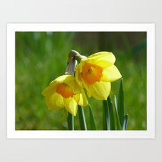 Two Daffodils Art Print
