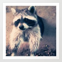 racoon Art Prints featuring racoon by oslacrimale