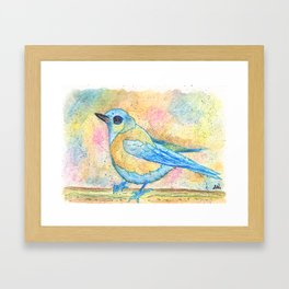 Western Bluebird watercolor print Framed Art Print