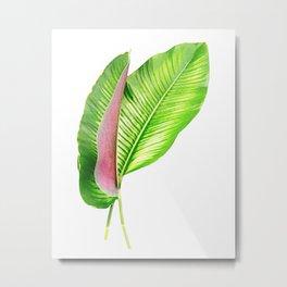 Calathea Leaves Metal Print