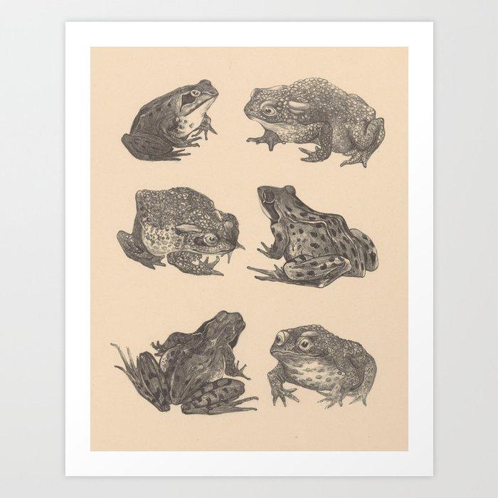 Naturalist Frogs Kunstdrucke
