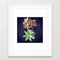 succulents Framed Art Prints featuring Succulents  by Yellow Barn Studio