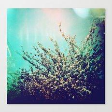 Holga Flowers I  Canvas Print
