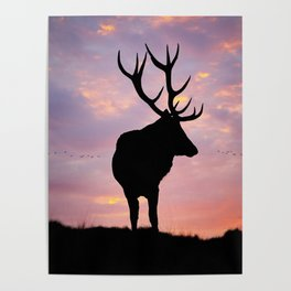 Stag And Sunset Poster