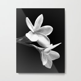 White Flowers Black Background Metal Print