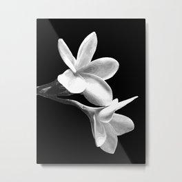 White Flowers Black Background Metal Print