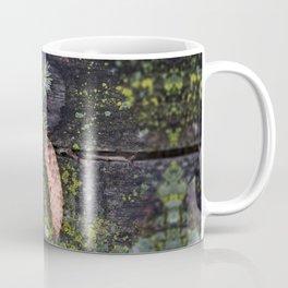 Pine Cone on Weathered Wood Coffee Mug