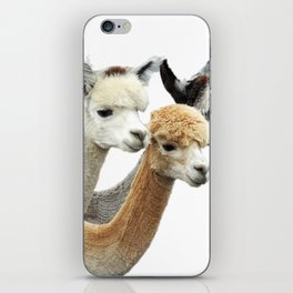 Alpaca Trio iPhone Skin