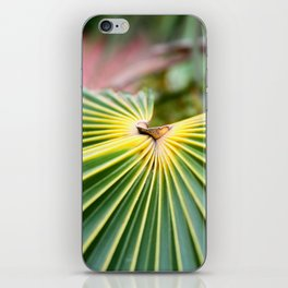 Cayman Islands II iPhone Skin