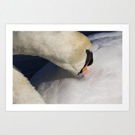 The Quiet Swan Art Print