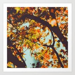 Autumn Photography - Beautiful Autumn Tree Art Print