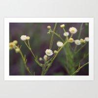 Small White Flowers Art Print