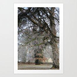 Cold Snap Art Print