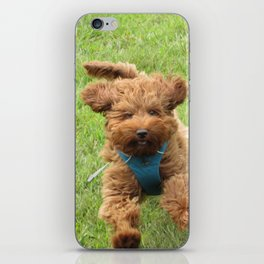 Luna the Labradoodle iPhone Skin