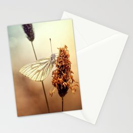 A Green-veined White (Pieris napi)...  Stationery Cards