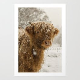 Highland Cow - George Art Print