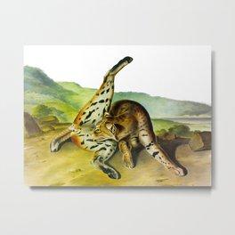 Texan Lynx Vintage Drawing Scientific Illustration Metal Print