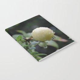 DewyTomatos Notebook