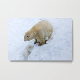 Polar bear mom with twins. Metal Print