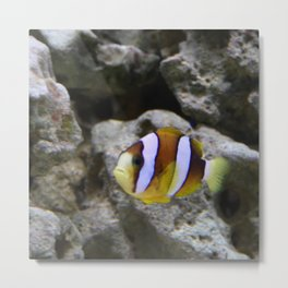 Sea World Colorful Fish Metal Print