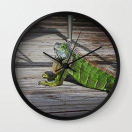 Cayman Iguana II Wall Clock