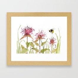 Flowers Bee Balm Pink Garden Wildflowers Nature Art Framed Art Print